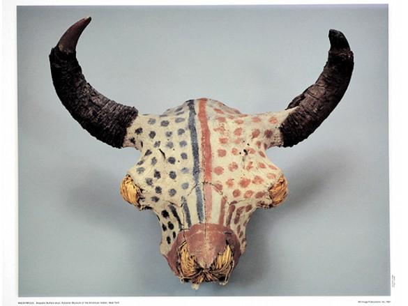 Arapaho Buffalo Skull